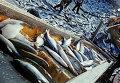 Рыбаки обрабатывают улов рыбы