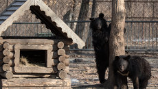 Гималайские медведи. Архивное фото