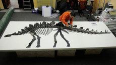 Затерянный мир красноярского динозавра