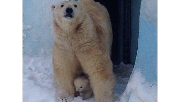 Первые фотографии маленького медвежонка в Новосибирском зоопарке