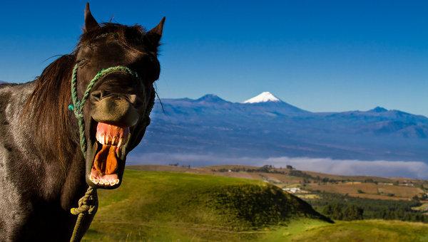 Счастливая лошадь