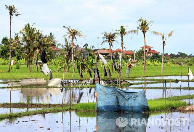 Зарубежные страны. Индонезия. Жизнь населения Бали