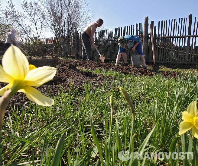 Дачники во Владимирской области