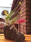 Окно в сад или сад в окно: как сделать мини-клумбу на подоконнике